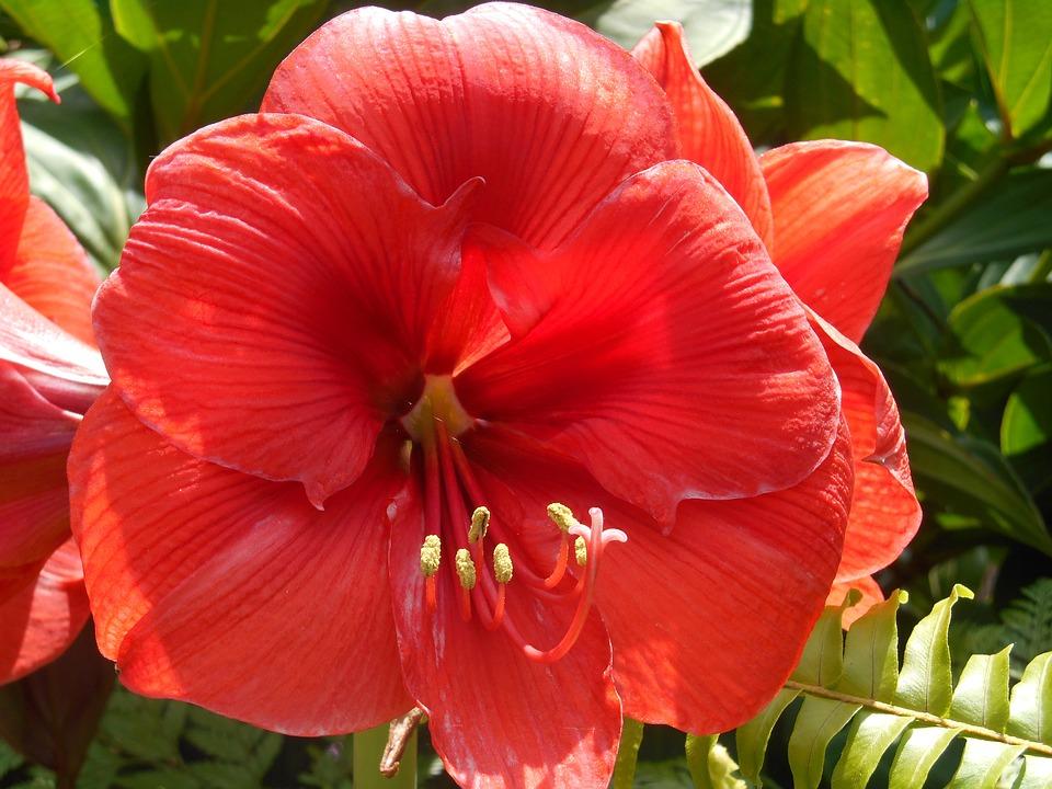 fleurs jardin exotique île de la réunion jardin