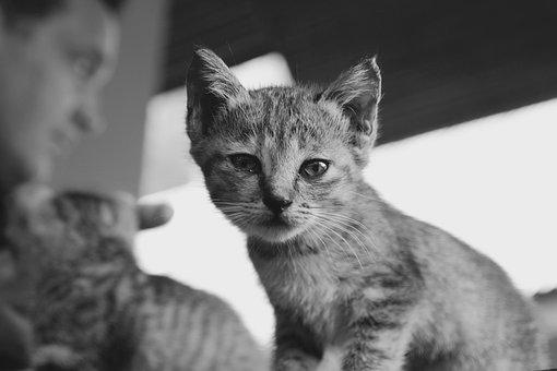 Cat, Kitten, Cat Baby, Cute, Pet