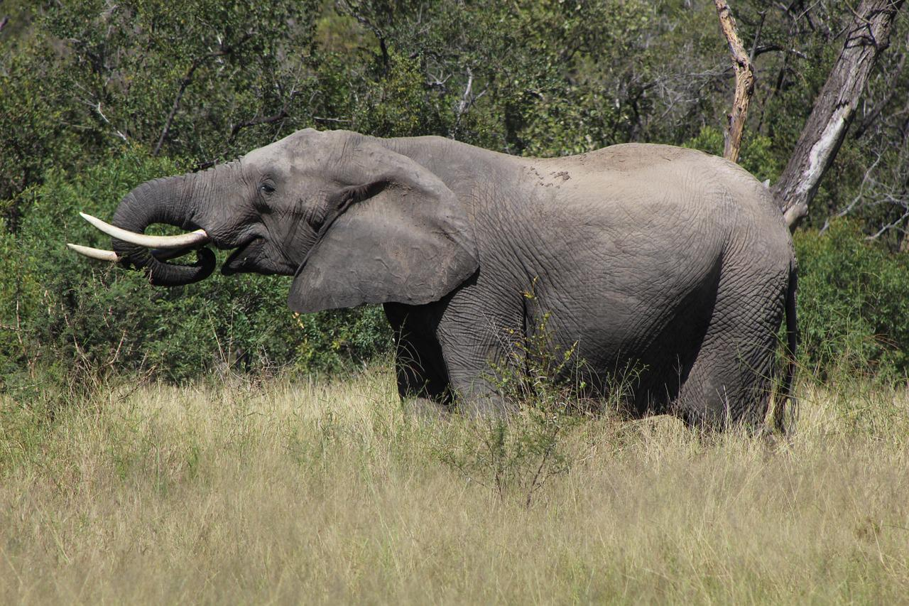 Открытки марта, картинки африканские животные