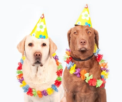 Dogs, Carnival, Humor, Pet, Ernst