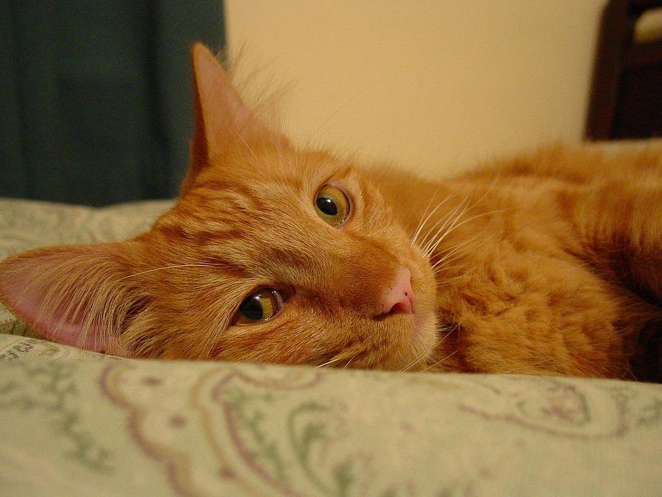 Gambar Koleksi Gambar Kucing Comel Lucu Azhan Cute Cat