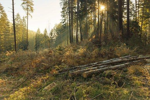 森林, 性质, 树木, 木, 秋季, 景观, 阳光, 金色的秋天, 太阳