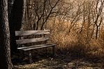 bench, bank, seat