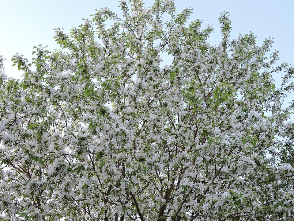 Baum Blüte Frühling · Kostenloses Foto auf Pixabay
