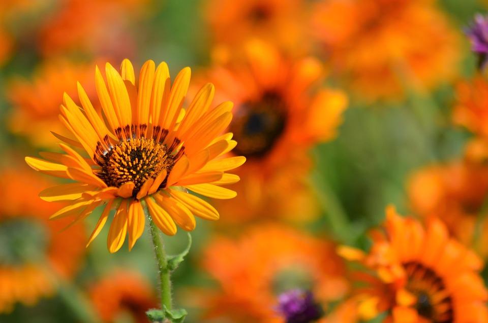 Фото летние цветы в природе 22