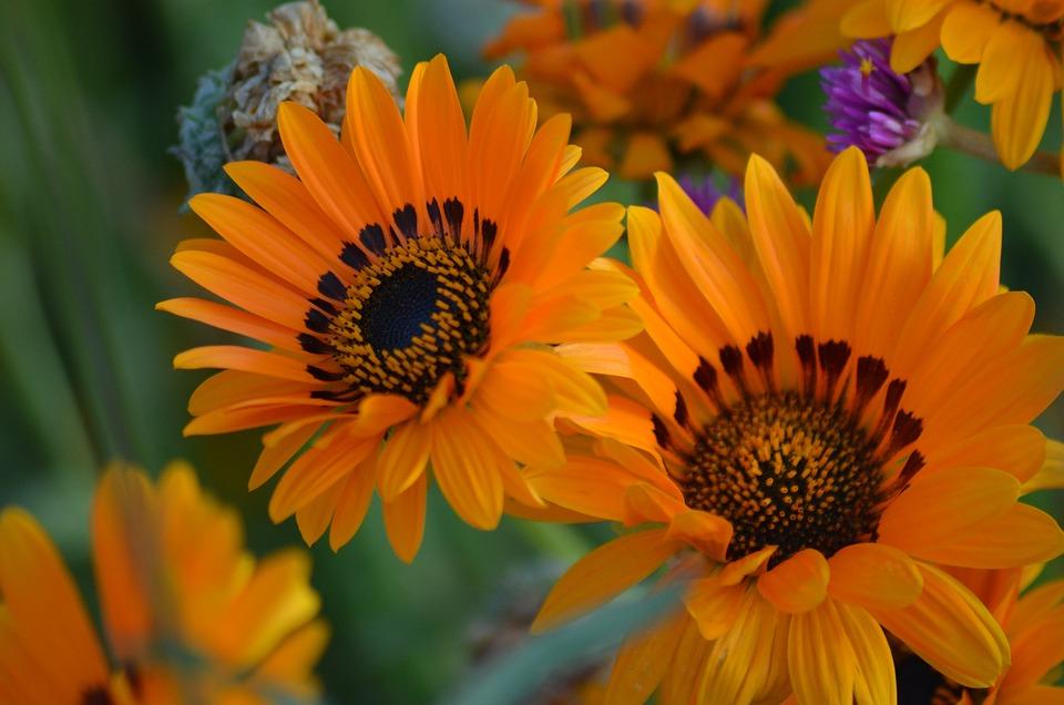 photo gratuite fleur nature pollen fleurs d 39 t image gratuite sur pixabay 1192695. Black Bedroom Furniture Sets. Home Design Ideas