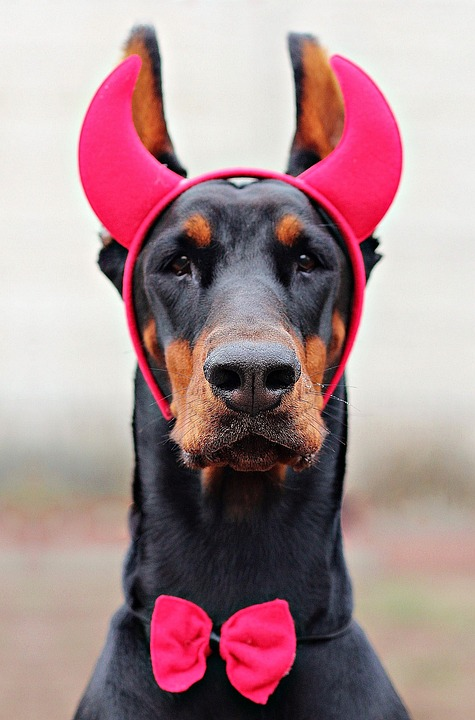Free Photo Devil Doberman Dog Dog Carnival Free