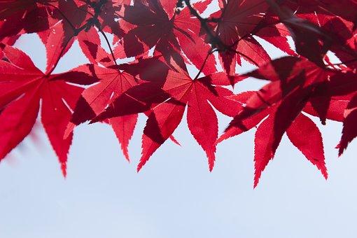 Blätter, Baum, Sommer, Herbst, Branch