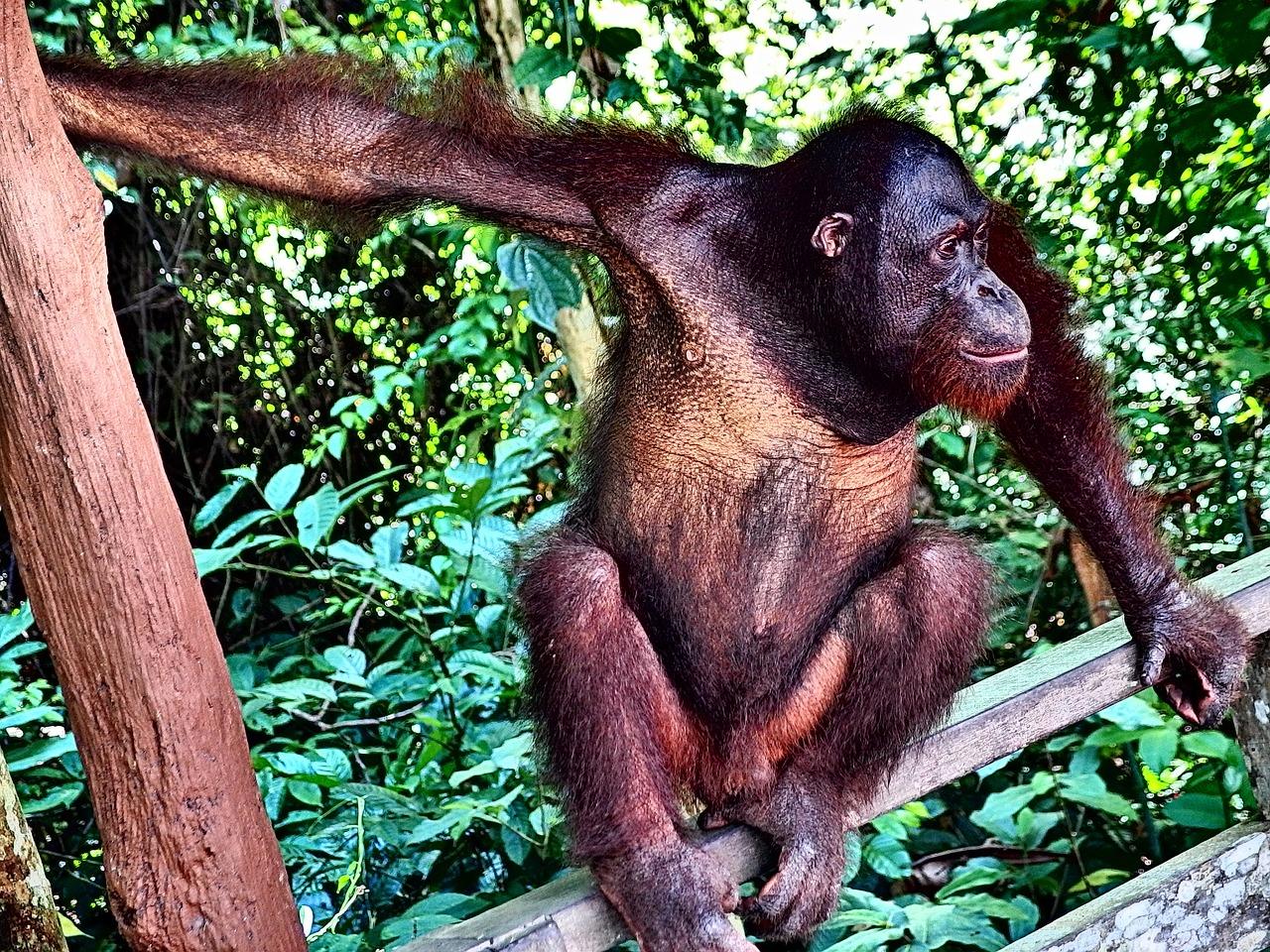 начинаете обезьянки в джунглях картинка почту