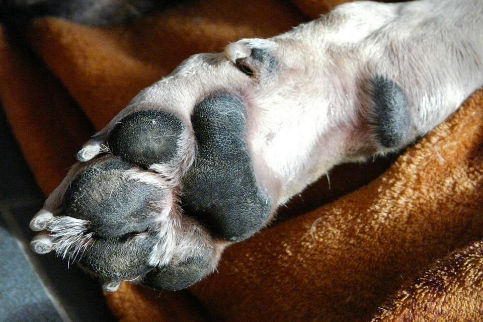 hund hundepfote gl ck kostenloses foto auf pixabay. Black Bedroom Furniture Sets. Home Design Ideas