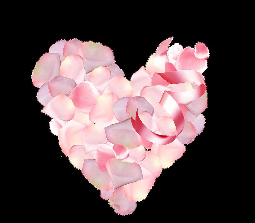 St Valentin, Petals, Pink, Rose Petals, Color Pink