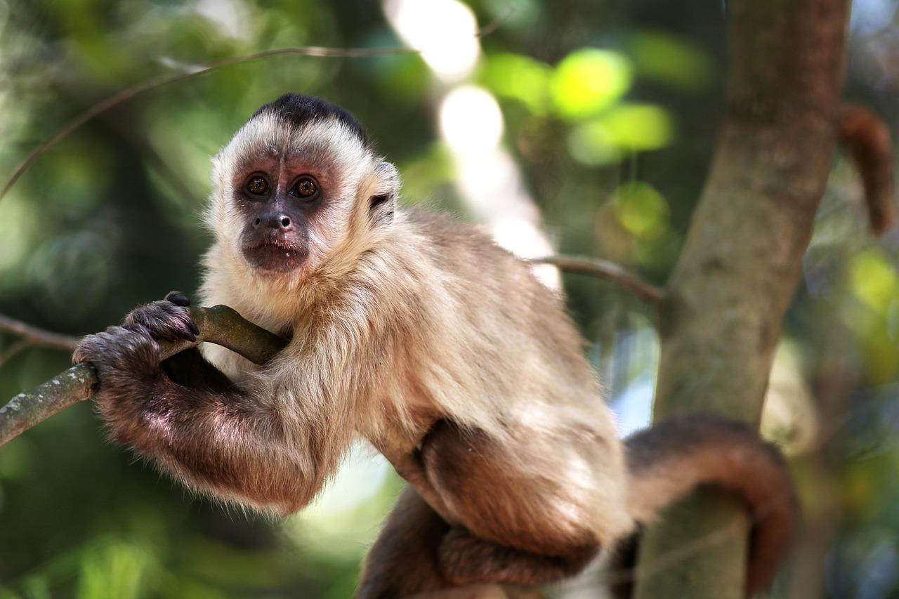 обезьянка на ветке картинки все жилые
