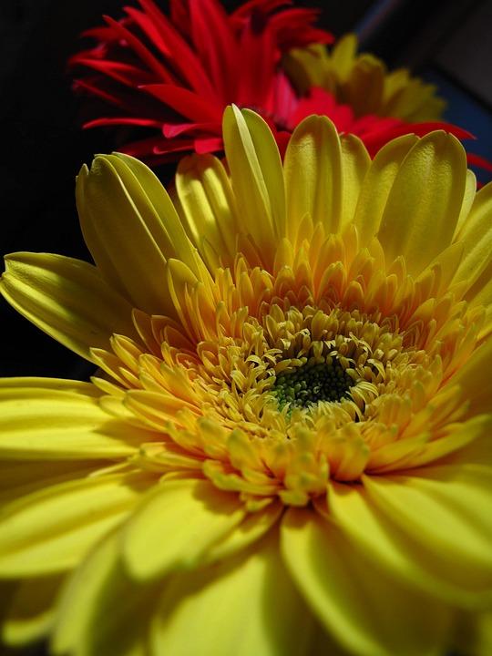 Fleur Jaune Rouge Photo Gratuite Sur Pixabay