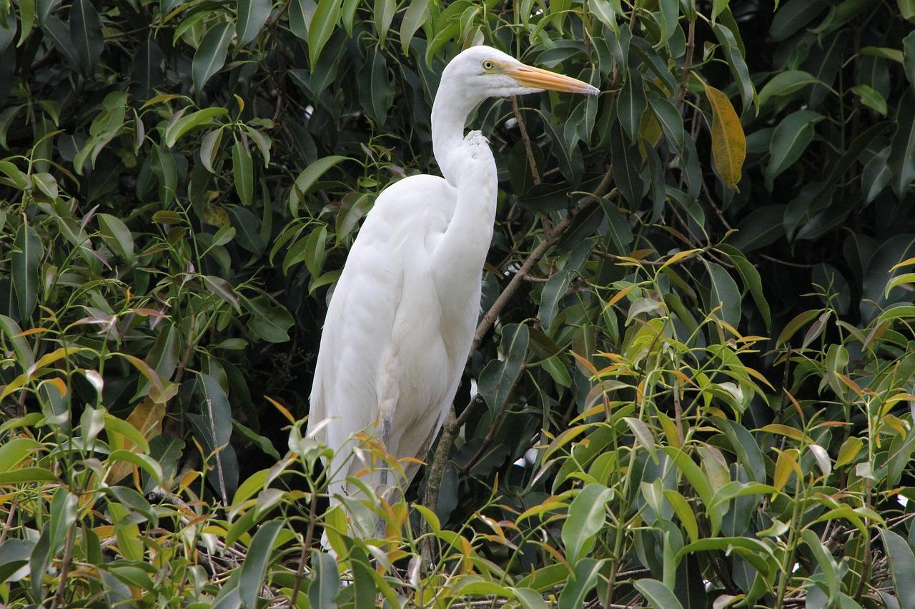состоит белый журавль фото птицы часть