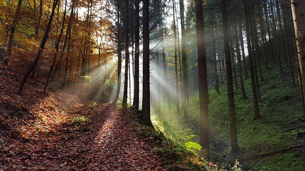 Wald, Lichtung, Herbst, Natur, Mystisch