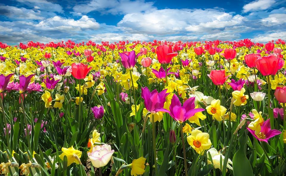spring awakening  u00b7 free photo on pixabay raindrop vector image rain drop splash vector