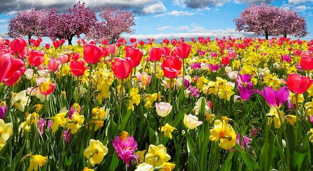Frühlingserwachen, Пролетта