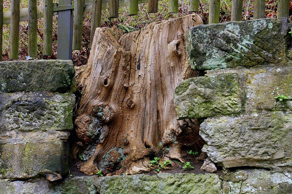 Baumstamm Mauer Zaun Kostenloses Foto Auf Pixabay