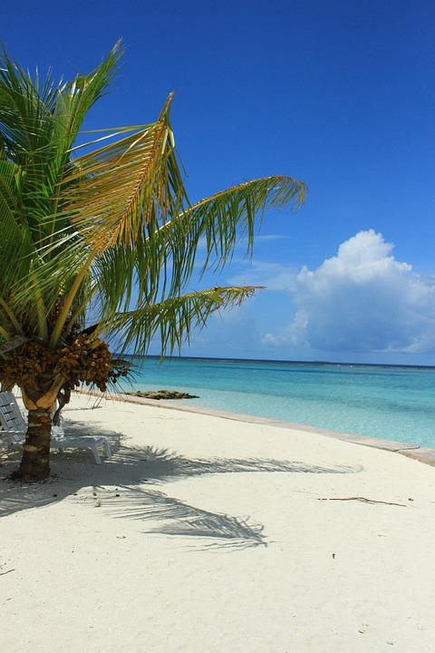 strand meer palme · kostenloses foto auf pixabay