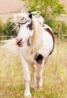 Horse Animal Nature Animal Portrait White