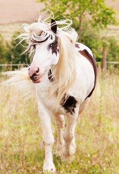 Horse Animal Nature Animal Portrait White