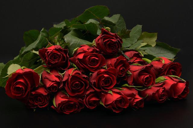 Free Photo: Roses, Red, Red Roses, Rose Red