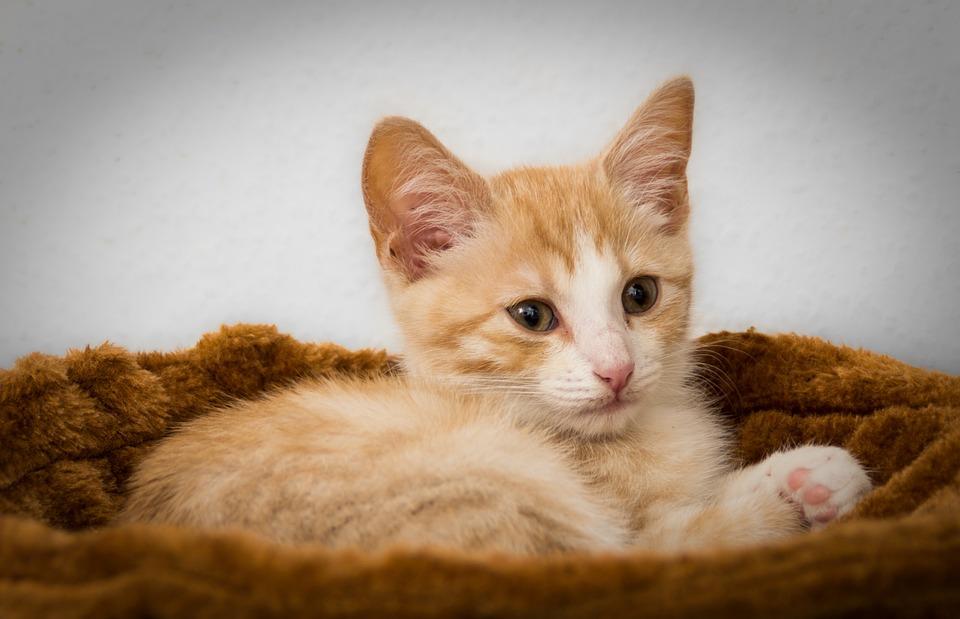 Populares Gato Gatinho Cansado Boa · Foto gratuita no Pixabay KB16