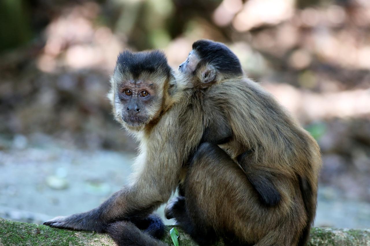 Картинки обезьян ногти
