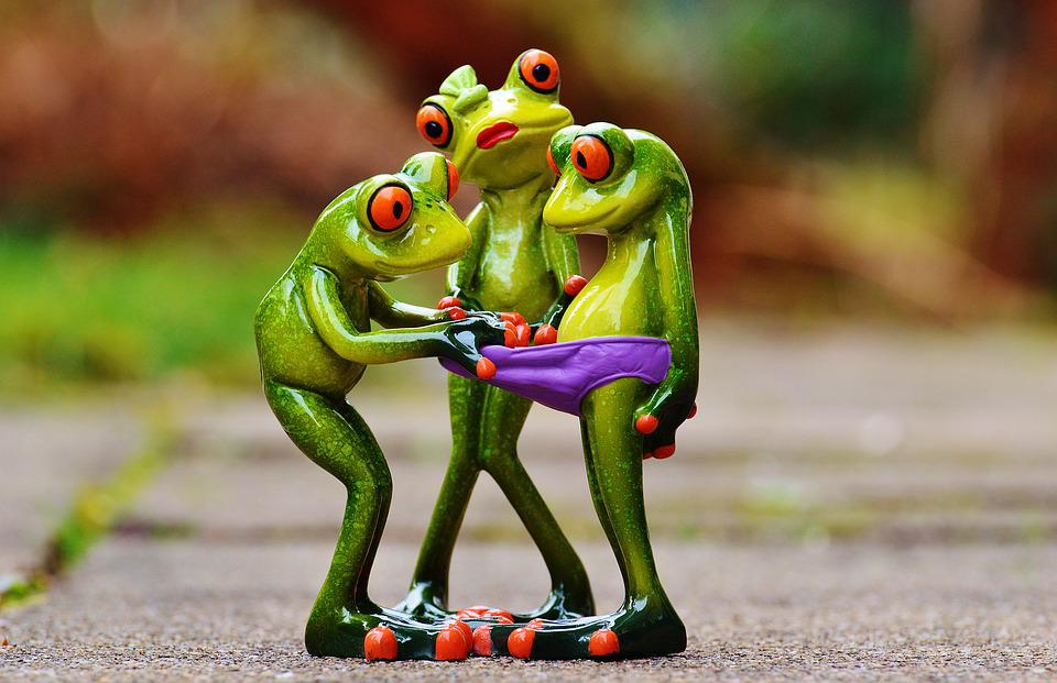 Free photo frogs curious funny figures free image on pixabay 1200161 - Funny frog pictures ...