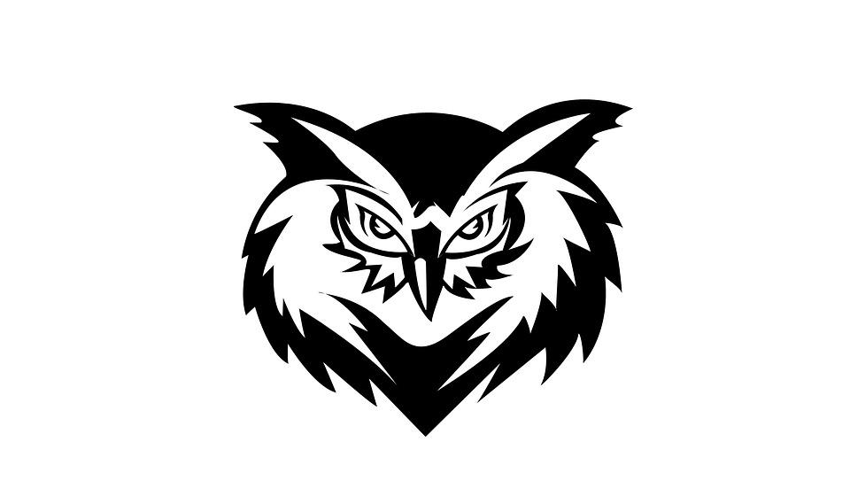 Bird Owl Animal Free Image On Pixabay