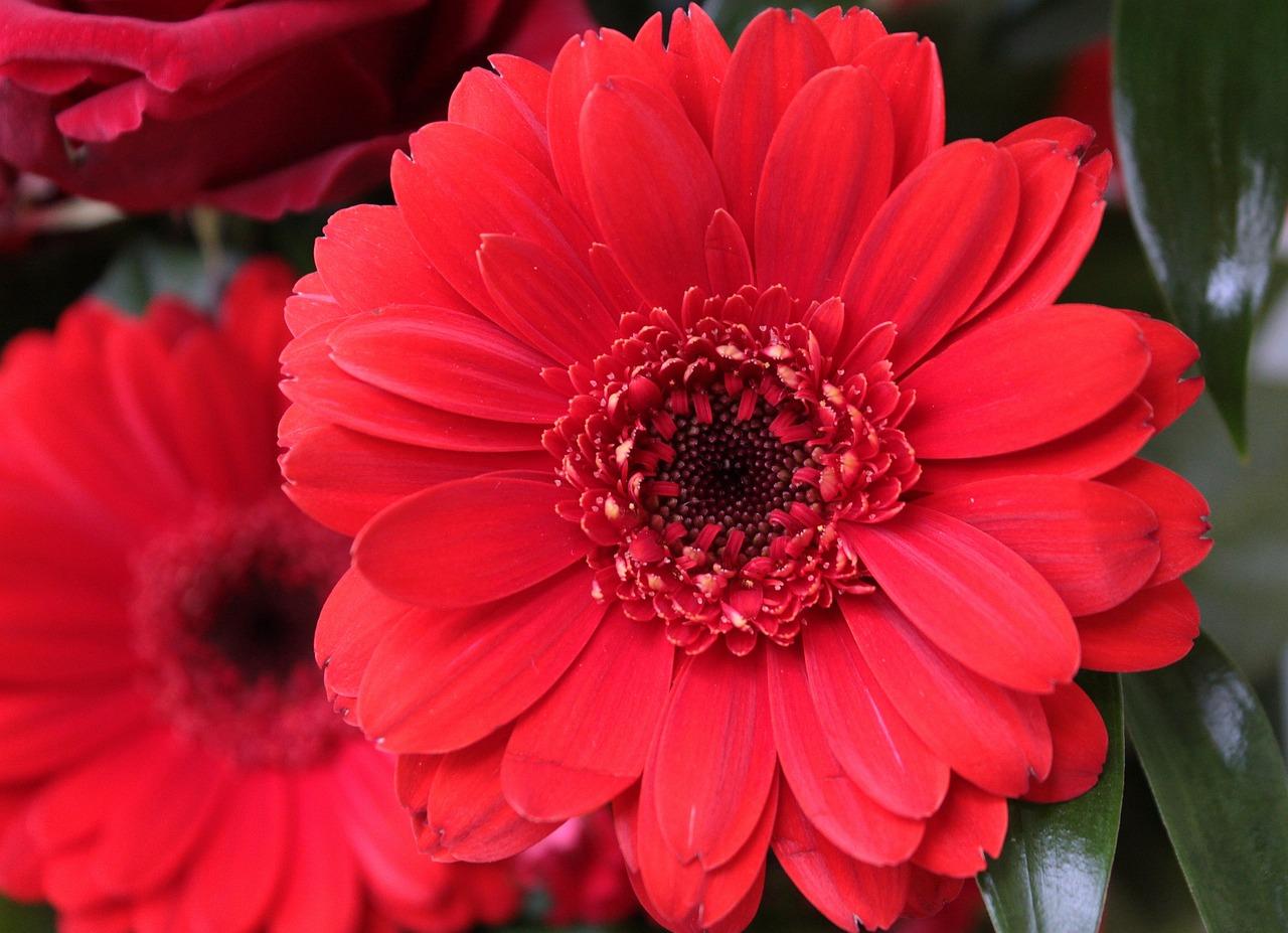 Красные только красные цветы фото ним