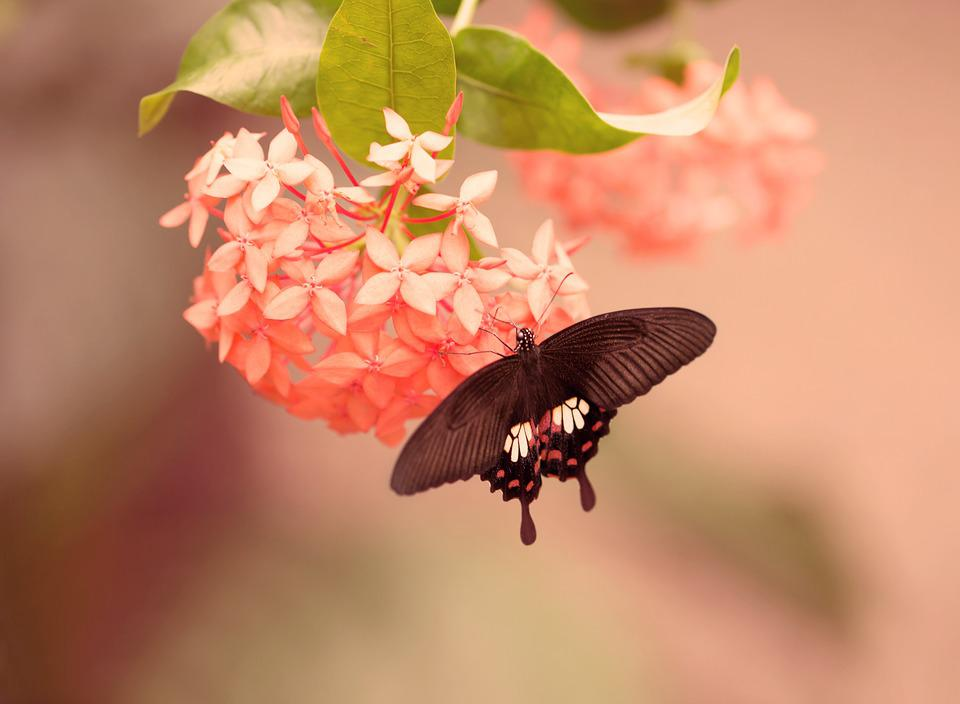 free photo butterfly flower insect summer free image
