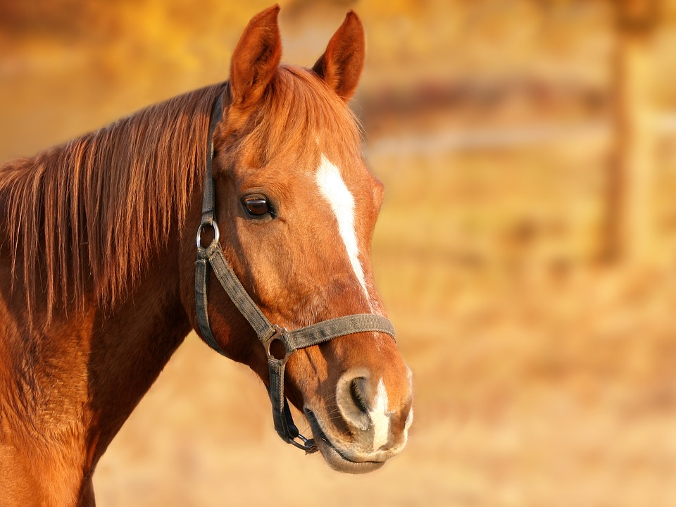 Horse - Free images on Pixabay