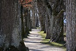 avenue, trees