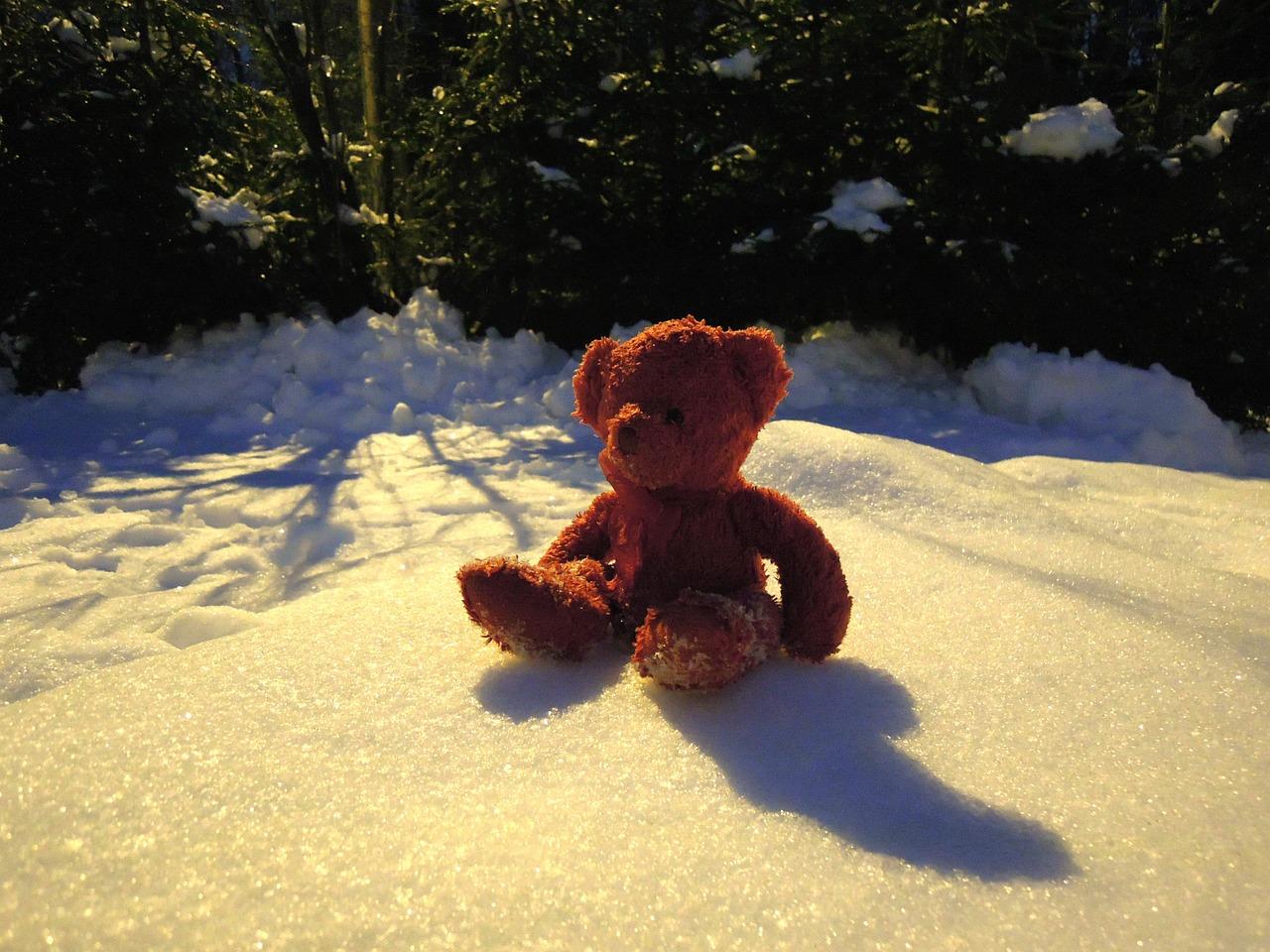 проживает фото мишек в снегу маникюр ромашками