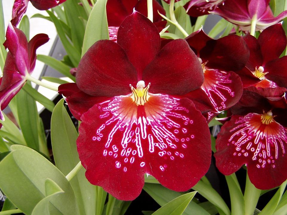 orqudea flor primavera planta ptalas natureza