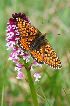 Butterfly Orchid Images Pixabay Download Free Pictures