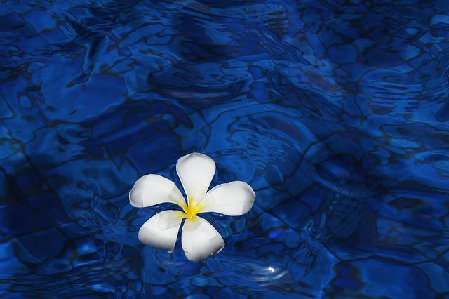Free photo: Flower, Water, Spring, Plant - Free Image on
