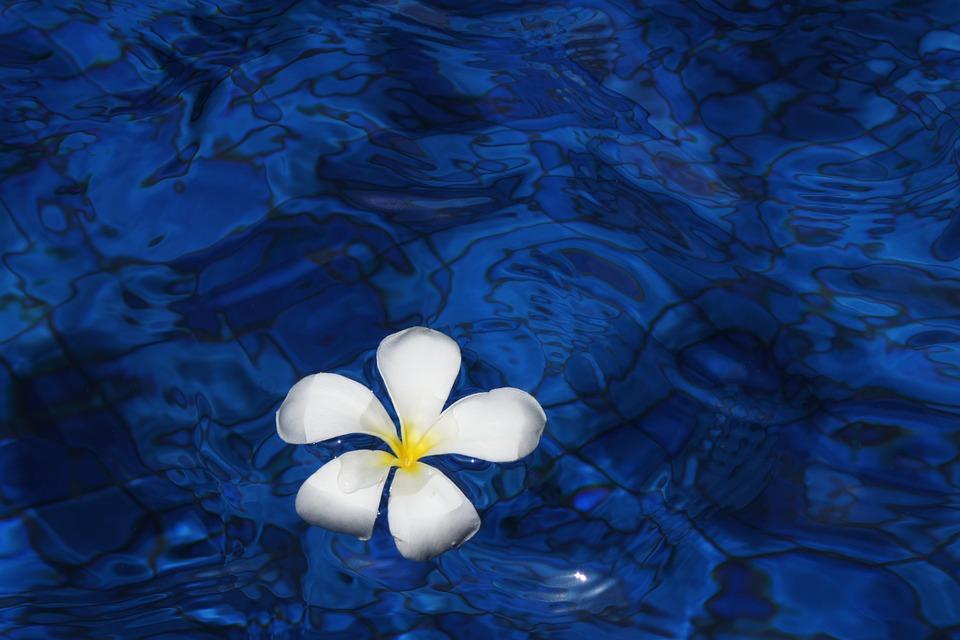 プルメリアの花言葉|ひまわり/色別花言葉/ハワイアンジュエリー