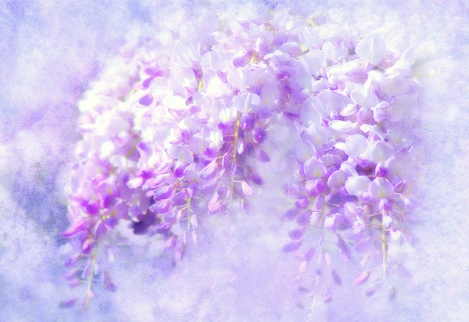 Blue Rain Wisteria Flowers · Free image on Pixabay