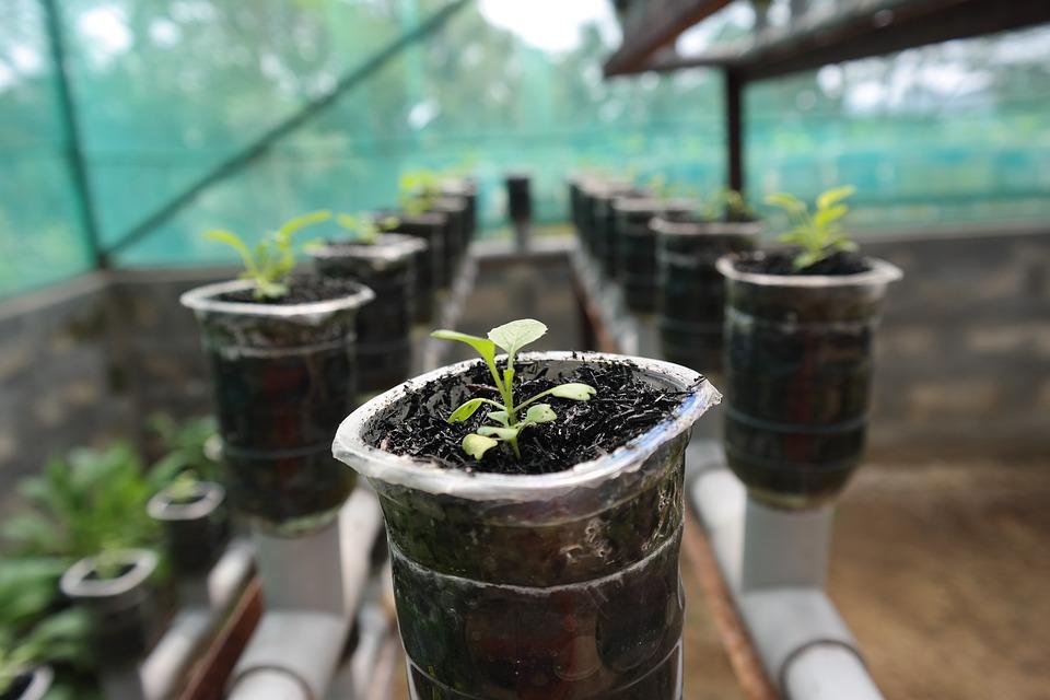 Plant, Hydroponic, Growth