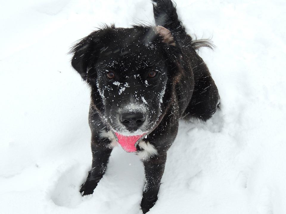 Jak dbać o łapy psa zimą? Pies, Pet, Zwierząt