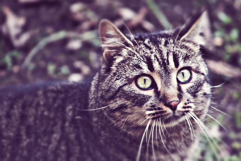 cat-1205519_960_720.jpg