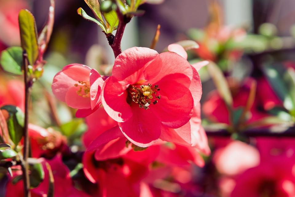 Photo gratuite fleur jardin red printemps image for Photos fleurs de jardin