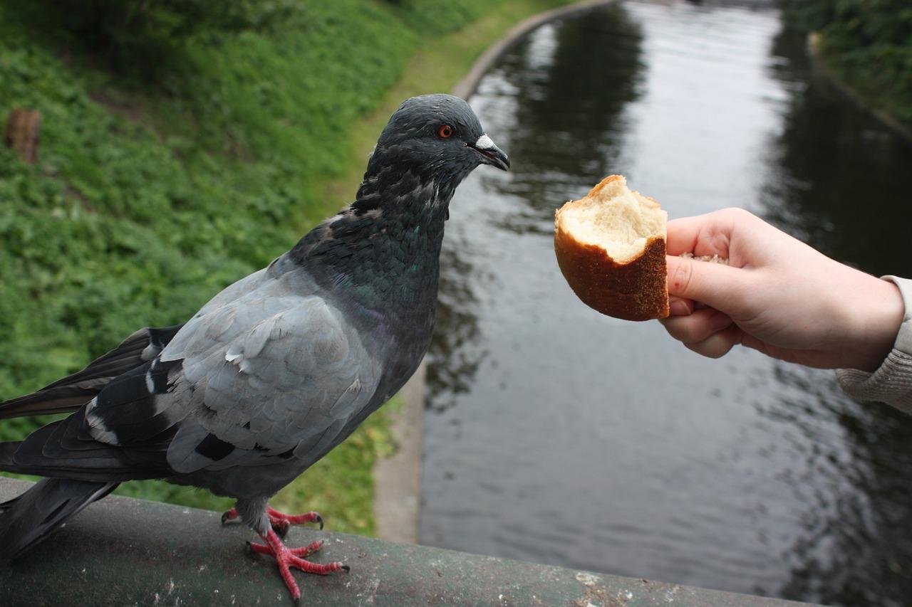 значительно превосходят картинка с голубем меня хлебом не корми проекты каменных