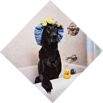 Black Lab Labrador Dog Funny Bath Time Rub