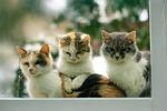 cats, feline, pet