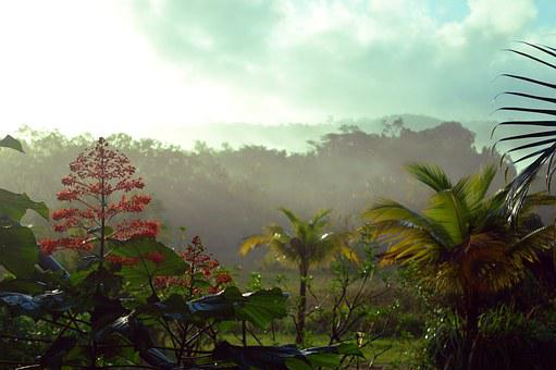 French Guiana, Rainforest, Forest
