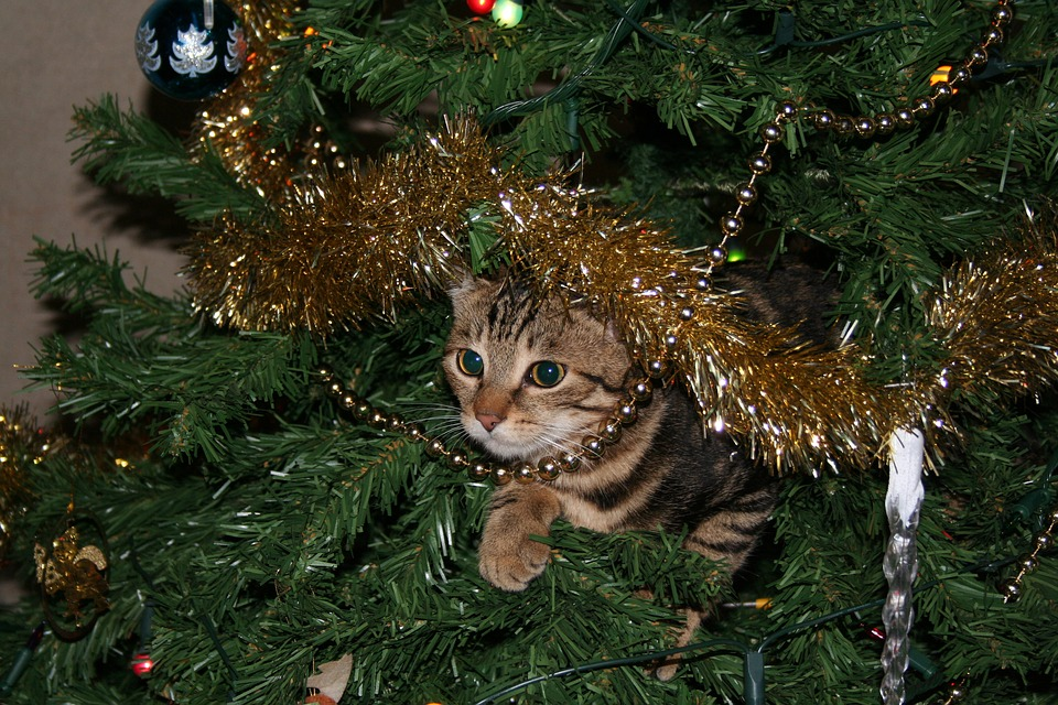 Cat Christmas Tree Pussycat Domestic Pet Animal