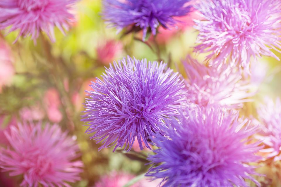 Flower flowers purple free photo on pixabay flower flowers purple pink violet garden nature mightylinksfo